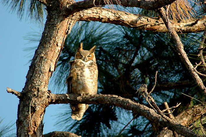 Whoooo's that in our yard?