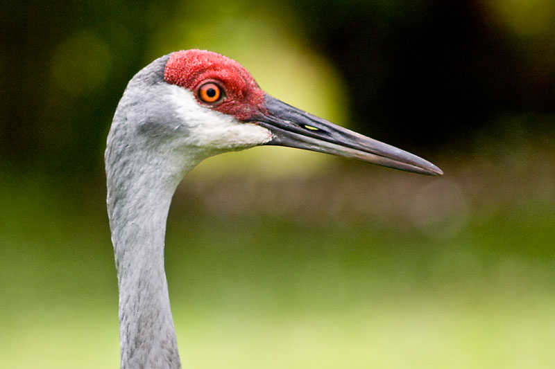 Mother Crane
