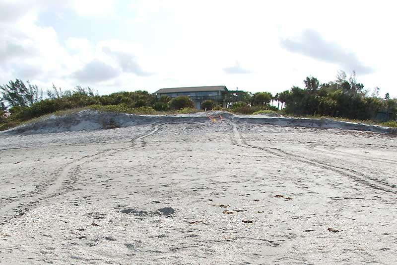Florida Turtle Nesting Season