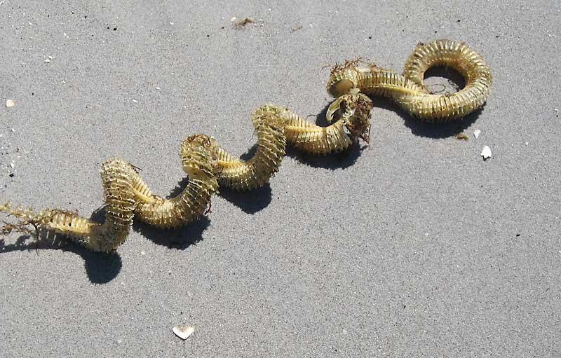 Sea Snake – Seaweed – Mermaid's Necklace???