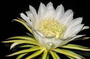 cactus5-1