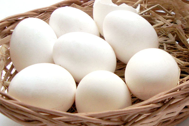 All my eggs in one basket – bad idea!