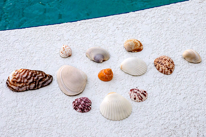 Shells to Remember