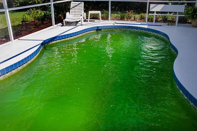 Swimming Pool Water Turned Green : Happy saint patrick s day new floridians