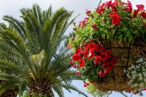 Flowers_ECB2795