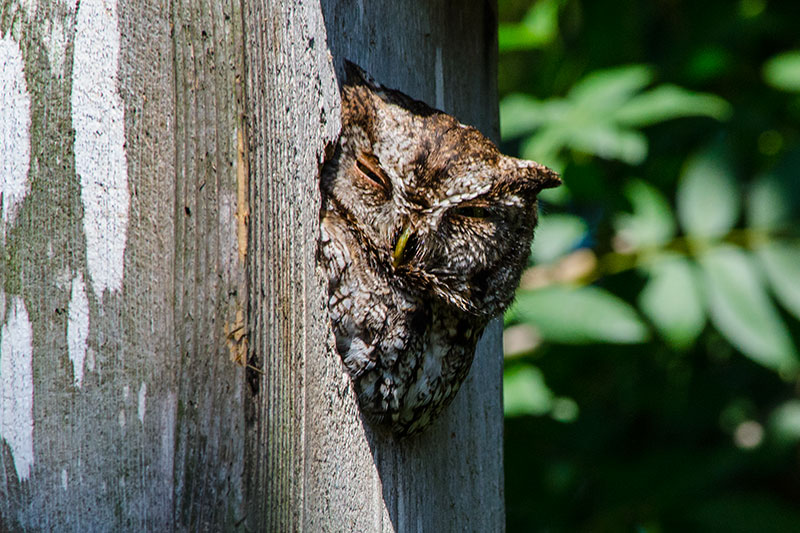 Owl Update
