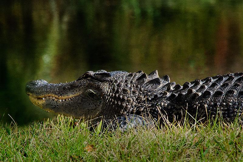 A Florida Icon